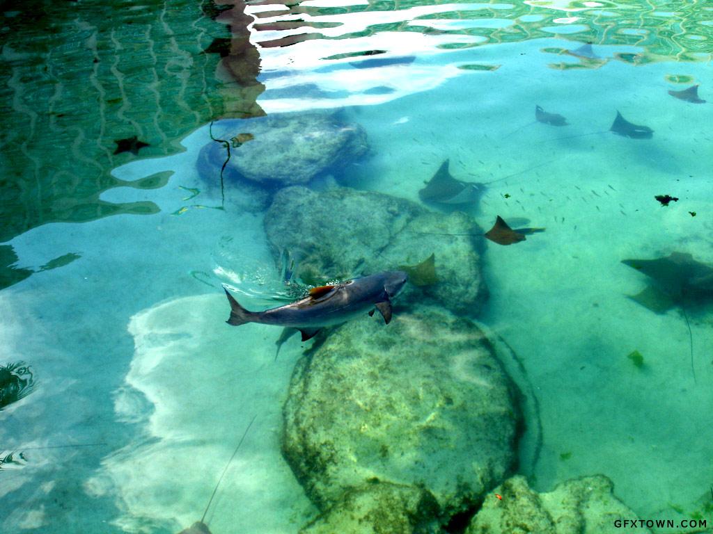 Fish Bahamas