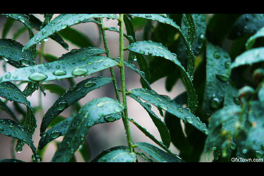 Wet Leaf Branches